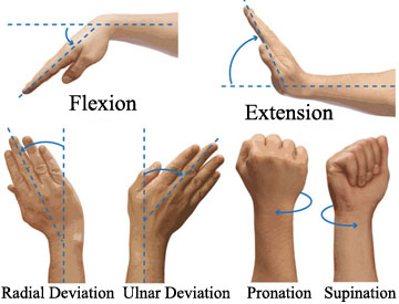wrist%20flexion%20extension.jpg