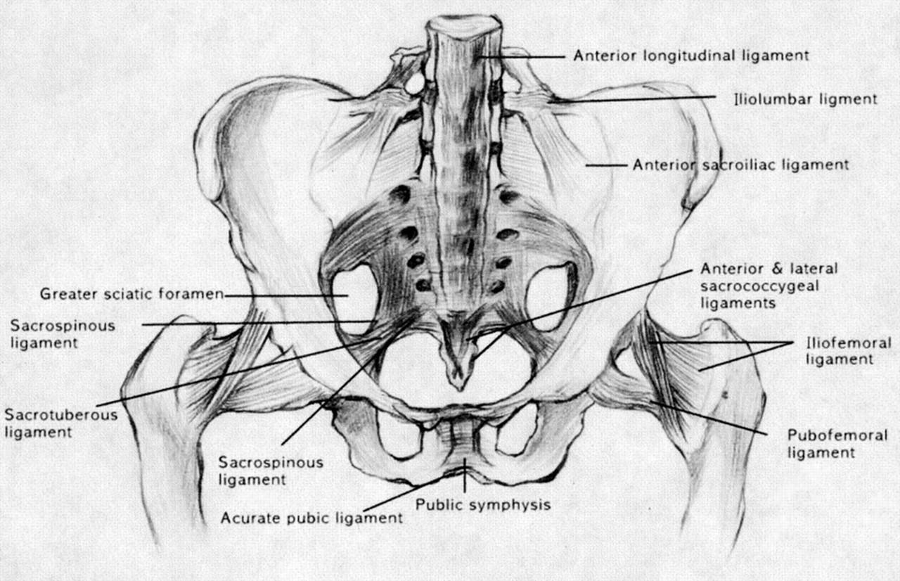 Sacroiliac Joint Dysfunction - Morphopedics