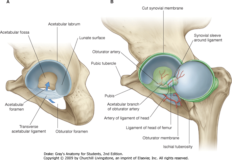 Total Hip Arthroplasty Morphopedics