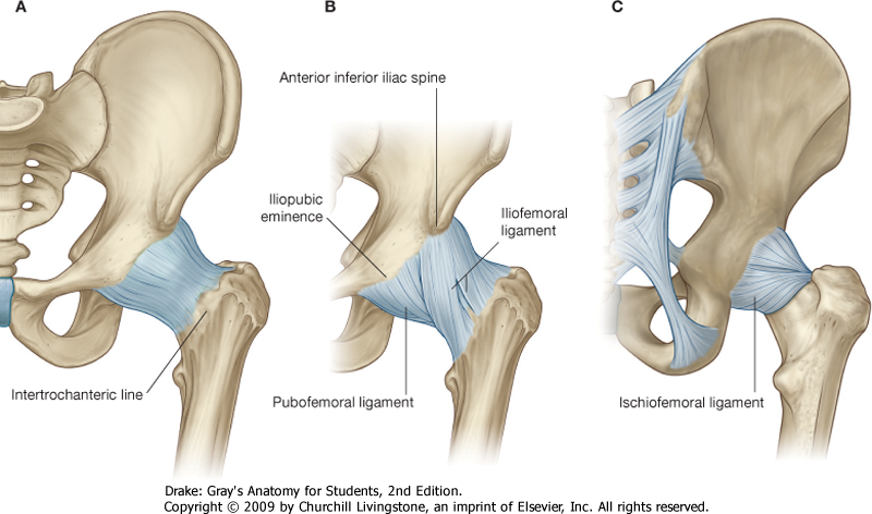 Total Hip Arthroplasty - Morphopedics